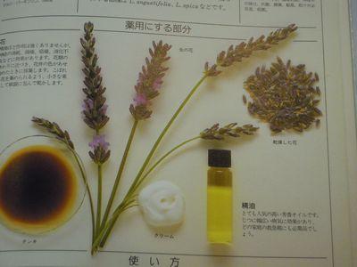 herb photo 009.jpg