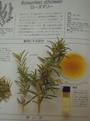 herb photo 016.jpg